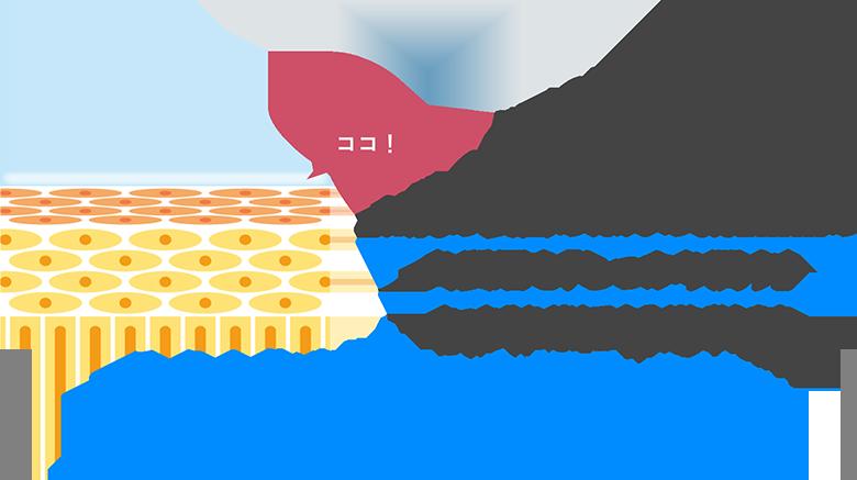 お肌の表面のほんの0.02mmの角質層を「しっかり潤す」たったそれだけで十分だと考えます。そう!化粧品に大切なのは、「保湿」だけなんです!